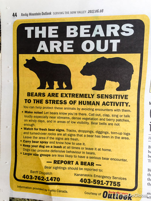 There are bears?