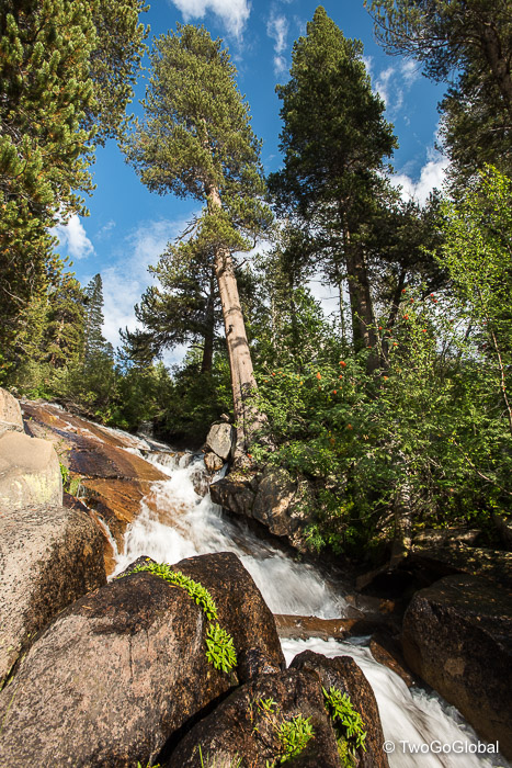 Tumbling water and Pine trees